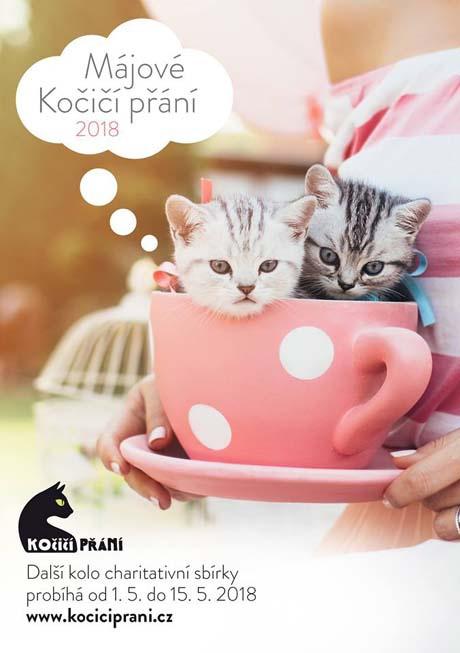 kocici_prani_460